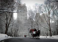 The Famous Horse Drawn Carriages of New York....help support them on Facebook