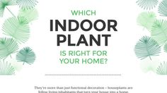 Which indoor plant is right for your home