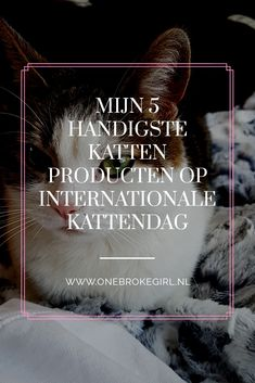 Het is vandaag Internationale Kattendag! Een mooi moment om mijn handigste kattenproducten te delen, die mijn leven hebben verrijkt. En dat van mijn katten natuurlijk.
