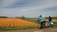 Holland-Cycling.com - Keukenhof Cycle Route Holland Cities, Visit Holland, Holland Beach, Tulip Fields, Cycle Route, Sense Of Place, Koh Tao, Round Trip, Travel Abroad