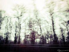 Au bord de la forêt