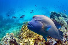 Can You Put a Price on the Great Barrier Reef? Economists Just Did