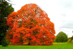 London, Kew Gardens  The colour rich vest of Autumn dressing the magnificent Kew Gardens …