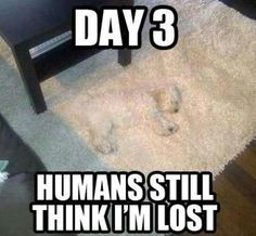 Hahahahaha!!! I feel sorry for his owners who are probably worried sick about him when really he's just been on the rug! :) #funnydogs