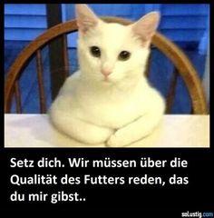 Wenn die Katze mit dem Essen nicht zufrieden ist