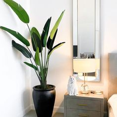 A few new details added to my master bedroom! I really wanted giant travelers palms or bird of paradise plants but it was nearly impossible to source real (large) ones, and I knew it would be hard to keep them looking perfect year round, so I settled for faux! Also, a black stone planter like this was going to cost $800 so I created this DIY version! Stay tuned to my YouTube channel for further details! Birds Of Paradise Plant, Travellers Palm, Stone Planters, New Details, Bedroom Inspo, My Dream Home, Master Bedroom, Palms, Stay Tuned
