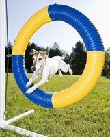 You and your dog can have hours of fun and exercise by doing agility.