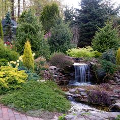 Conifers and water feature