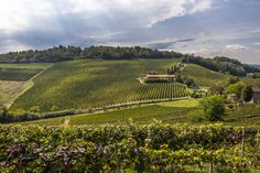 The Indispensable Guide to Piemonte and its Wines. #wine #winery #places #to #visit #travel #vineyard #grapes #tasting