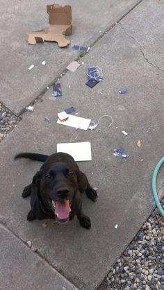 Incrível unbox do iPhone 5 feito por um cachorro!!