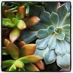 Succulents Cactus, Succulents, Plants, Cactus Plants, Succulent Plants, Planters, Plant, Planting