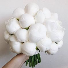 Perfect white peonies for your inspiration🖤 TAG someone who'd love these 💓⁠ ⁠.⁠ Flowers by ⁠. Flowers Nature, My Flower, Beautiful Flowers, Piones Flowers, White Peonies, White Roses, Wedding Bouquets, Wedding Flowers, Wedding Bells