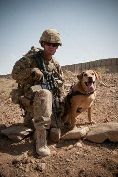 War Dogs..American heros!