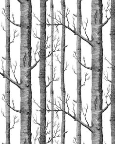 HaokHome® Modern Birch Tree Wallpaper Non Woven Forest Trunk Wall Paper  Blacku0026White   57square Feets