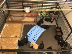 Cute Little Puppies, Little Dogs, Dog Birth, Building A Dog Kennel, Puppy Pens, Scottish Terrier Puppy, Puppy Litter, Whelping Box, Puppy Room