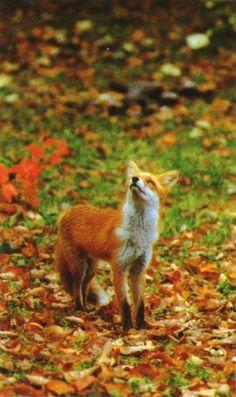 Autumn at its finest.