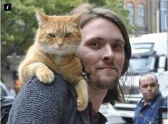 Resultado de imagem para bobe gato y james bowen