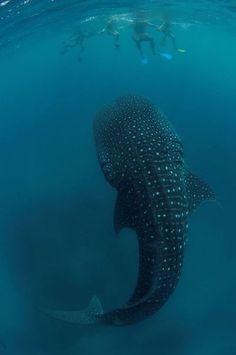 Algo supuestamente divertido que nunca volveré a hacer, por Laura Ferrero / Fronterad (Tiburon ballena)