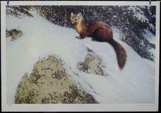 $95.00 Wildlife Animal -- Marten by Claudio D'Angelo Art Print