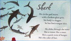 """Shark"" by Kate Coombs in WATER SINGS BLUE"