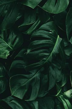 Leaf Green II by Danilo de Alexandria is printed with premium inks for brilliant color and then hand-stretched over museum quality stretcher bars. Money Back Guarantee AND Free Return Shipping. Dark Green Aesthetic, Nature Aesthetic, Rainbow Aesthetic, Aesthetic Colors, Aesthetic Collage, Aesthetic Photo, Aesthetic Pictures, Photo Wall Collage, Picture Wall