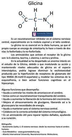 Infografía Neurociencias: Glicina. | Asociación Educar