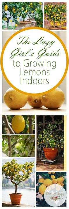 Ideas About How to Grow a Lemon Tree, Care and Tips #gardening