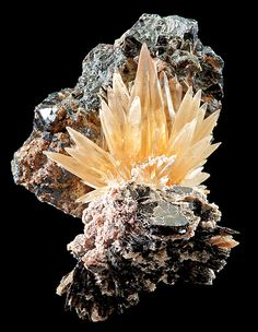 Golden Calcite perched atop Biotite matrix with Magnetite crystals