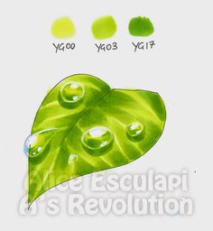Copic Marker Tutorials Including water droplets on a green leaf