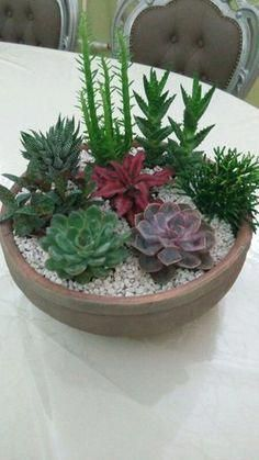 Container Gardening For Beginners Cactus y Suculentas Indoor Vegetable Gardening, Succulent Gardening, Succulent Terrarium, Garden Plants, Container Gardening, Indoor Plants, Organic Gardening, Indoor Outdoor, Flower Gardening