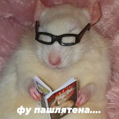 Memes Funny Faces, Stupid Memes, Funny Mems, Haha Funny, Funny Animal Pictures, Funny Animals, Funny Chihuahua Pictures, Hello Memes, Funny Hamsters