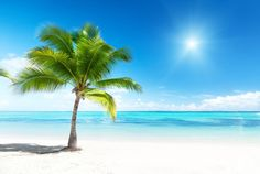 Relax on your own beach with #wallpaper - Paradise - from rebelwalls.com