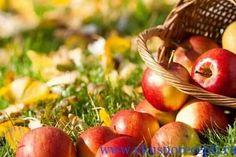 яблочный спас 2017 года какого числа