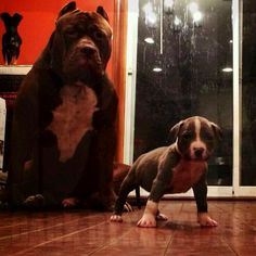 "DDK9's ""The Hulk"" & Son"