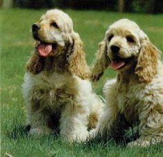 Happy Duo