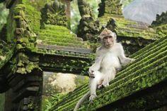 White Monkey, from Besakeh Bali