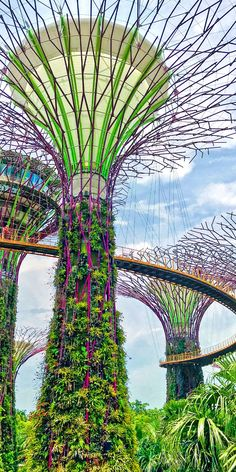 Singapore, Singapore | The Singapore Botanic Garden (and adjoining Orchid Garden) approach horticulture from a more traditional perspective, while the spacey Supertrees of Gardens by the Bay would seem more aligned with the movie Avatar.