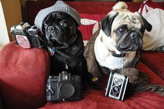 nocci and porter- hipster pugs