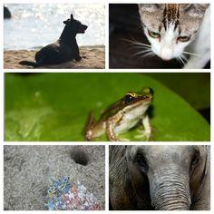 Tierisches Thailand