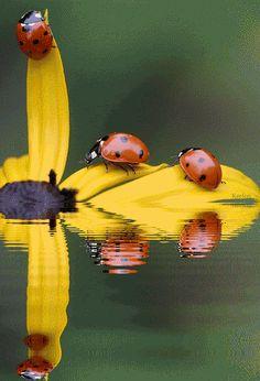 Unexpected Pleasure while Kayaking! What do You need for your Kayak today? www.TheRiverRuns.info #kayaking #kayak #ladybug