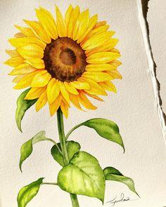 Insta Fiddler continua pressionando letras no feed . Sunflower Sketches, Sunflower Art, Watercolor Sunflower, Watercolor Bird, Watercolour Painting, Sunflower Drawing, Floral Drawing, Art Floral, Flower Drawing Tutorials