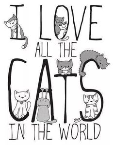 It's The True!!! Love ♥ Cats ♥ SLVH ♥♥