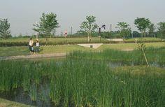 Works / Gunma Museum of Art, Tatebayashi & Tataranuma Park Landscape Design - オンサイト計画設計事務所