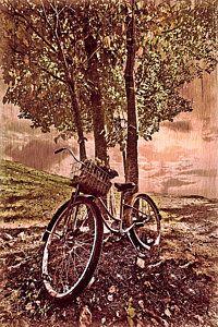 Vintage Bicycle Photograph - Bicycle In The Park by Debra and Dave Vanderlaan