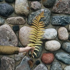 johnnaholmgren:  Ferns fade into even prettier Fall colors....