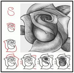 Draw a Rose | Do It And How