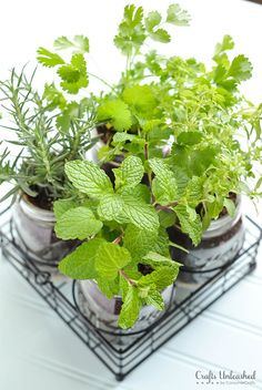 This mason jar DIY herb garden is perfect for keeping fresh herbs growing right in the kitchen. Follow along as we show you how to make your own!