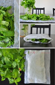 How To Preserve Mint