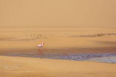 Desert flamingo by jtrof #animals #animal #pet #pets #animales #animallovers #photooftheday #amazing #picoftheday