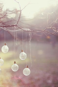 light bulbs hanging on tree